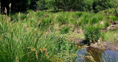 Inventaire des zones humides en cours