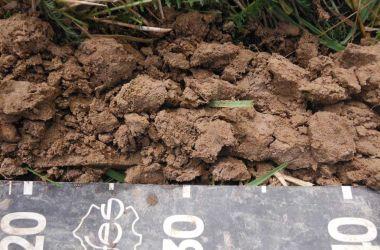 Inventaire des zones humides du SAGE Orge-Yvette en domaine privé